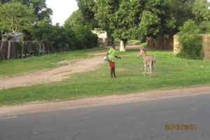 Ndoubouthe  Village Sur La Transgambiene Apres Toubacouta
