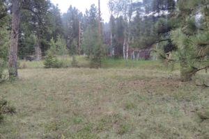 Pine Junction