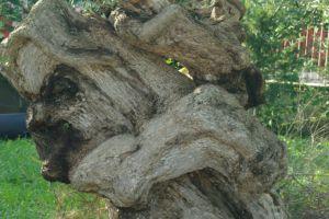 Castellana Grotte